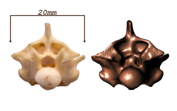 Hueso Vértebra Serpiente - Fabricando 3D - Servicio de escaneo 3D